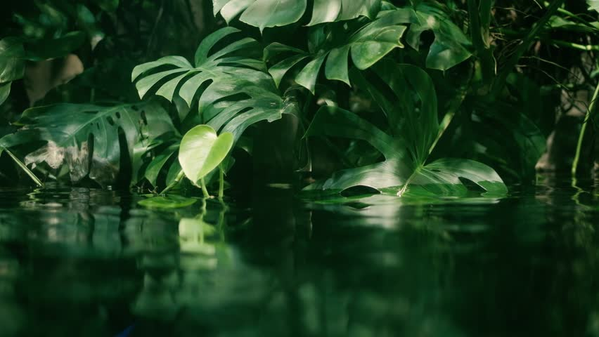 Calm relaxing background, tropical leaf submerged in exotic water, water waving slowly and reflecting plants, rainforest ecology concept