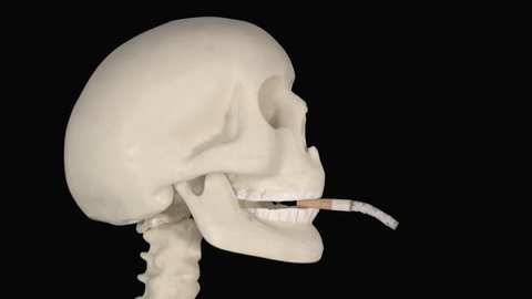Human skull smoking a cigarette with long ash in the studio. Shot in 4k resolution with dark background