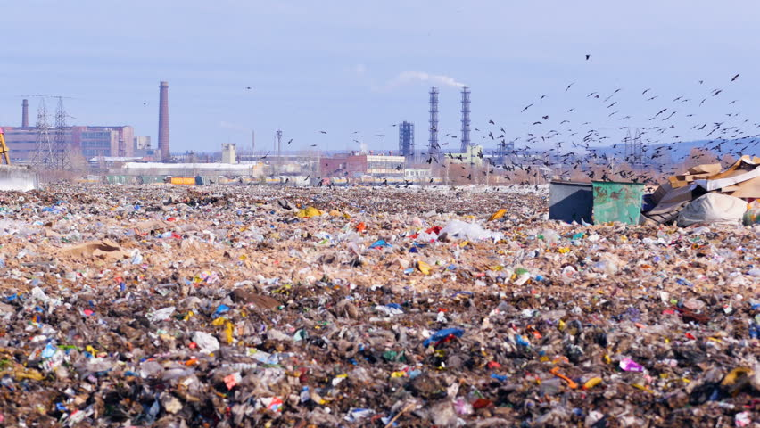 Flock of scavenging birds on a landfill site with piles of garbage. | Shutterstock HD Video #1018231732