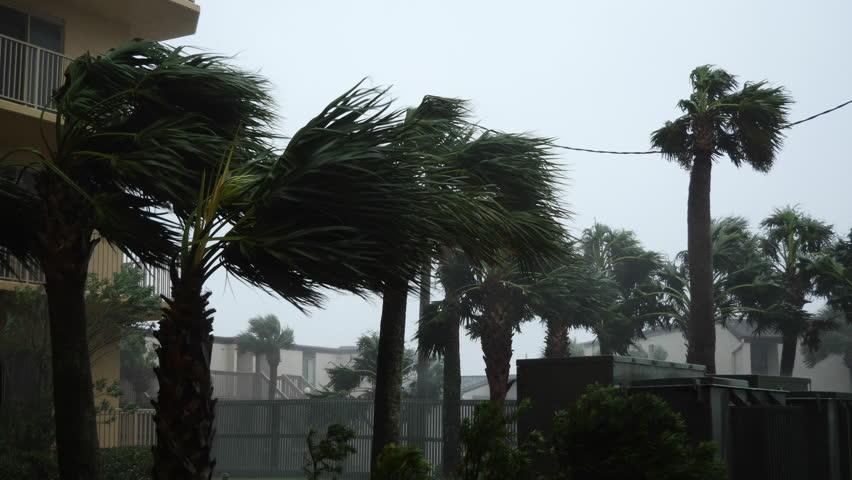 Hurricane Michael Blows Palm Trees #1018307398