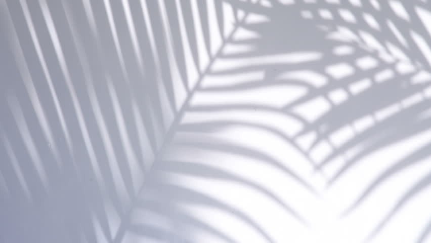 Closeup the motion of shadow palm leaves on a white wall background.