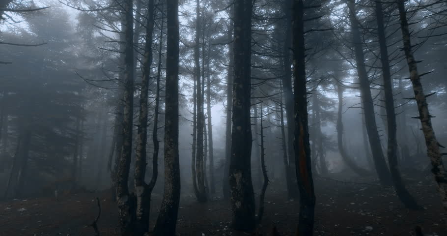 Scary mystical dark foggy autumn/winter forest in motion.Gimbal steadicam movement as we walk in or past a fairy tale like forest with tall fir trees in heavy fog smoke and mist.Originated in10bit.