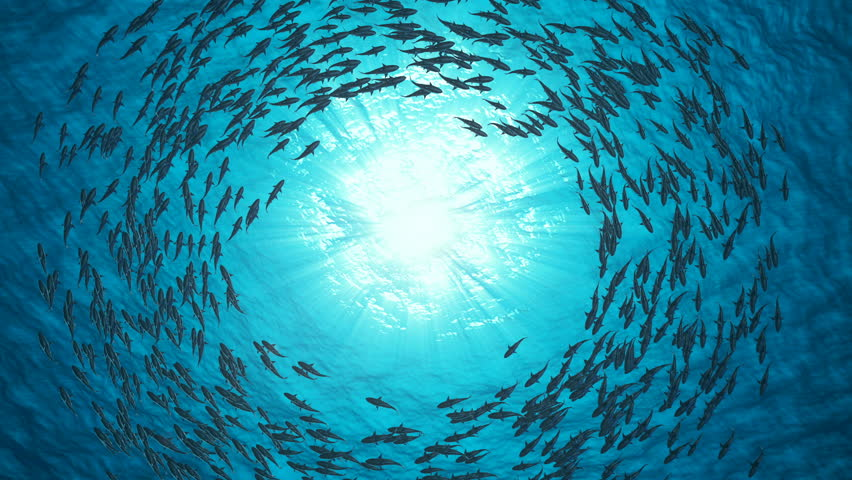 School Of Fish. Sharks swim in a circle.