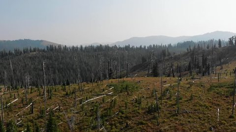 A new forest grows after a wildfire in Wyoming.