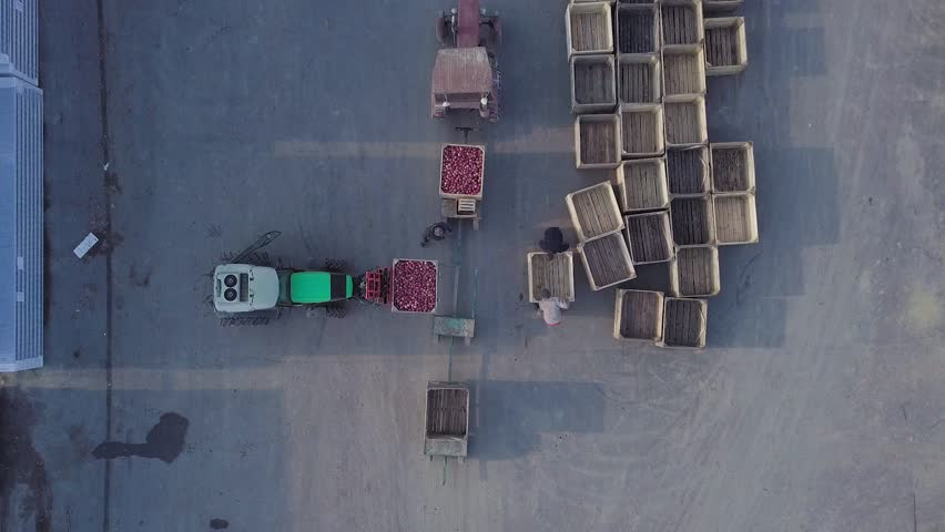 Warehouse workers are preparing an empty crate for apples. Loader is relocating pallet with apples in the territory of warehouse for further transportation to the plant for the production of juice. Ae