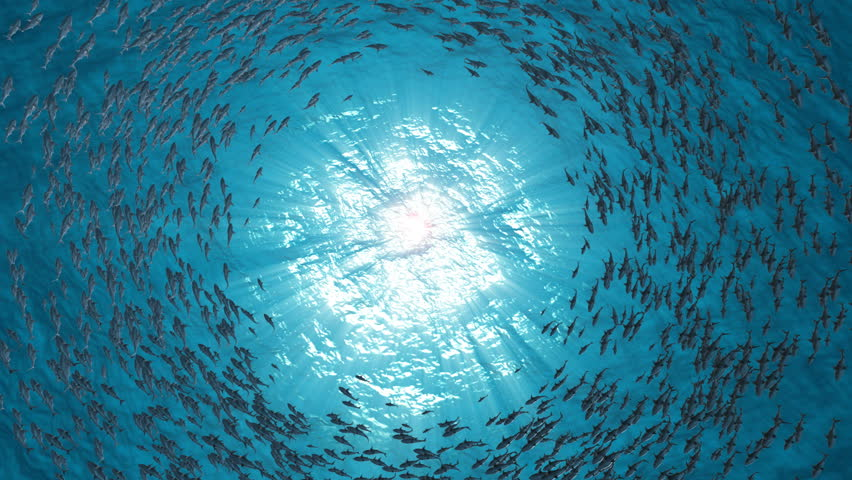 School Of Fish.Sharks swim in a circle. | Shutterstock HD Video #1018611226