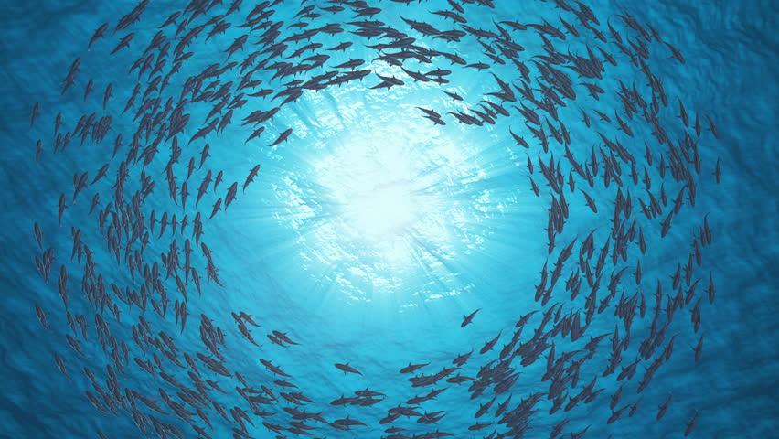 School Of Fish.Sharks swim in a circle. | Shutterstock HD Video #1018611238