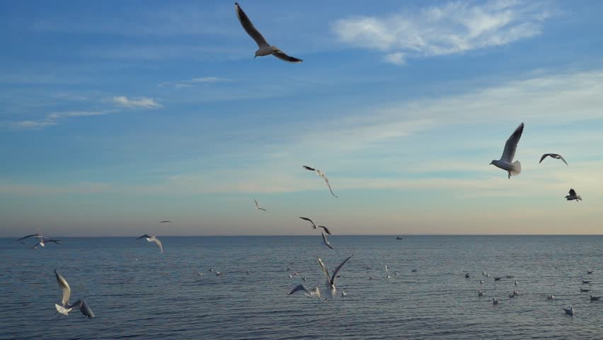 Seagulls over the sea. Slow motion. | Shutterstock HD Video #1018701076
