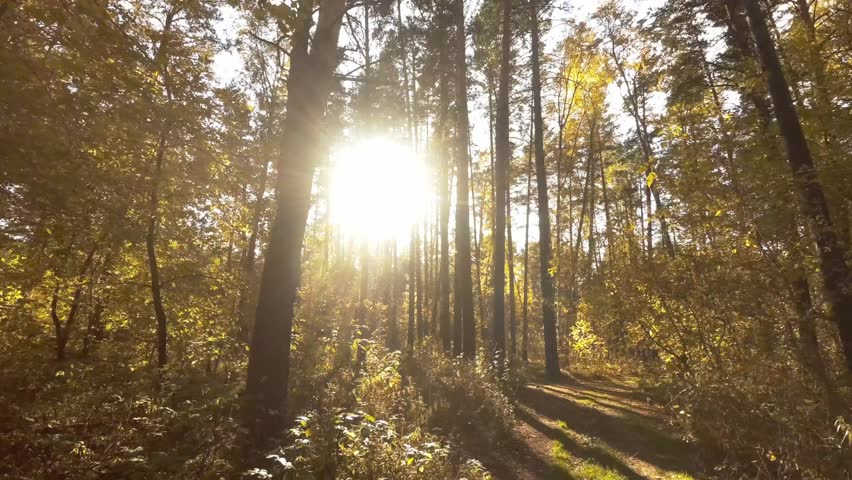 Walk under the canopy of trees | Shutterstock HD Video #1018801987