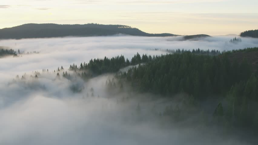 Misty green forests and hills of Portland Oregon #1018873042