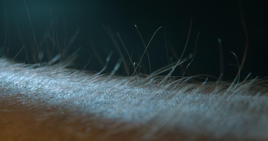 Arm hair rising, emotional feeling | Shutterstock HD Video #1018910536