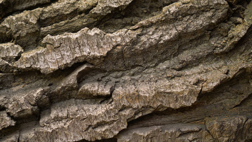 Bark of brown wood close-up rotates 4k. Tree pine or oak. Macro of a tree is like rocks taken from a quadcopter. Clear place for your text. Empty space for your title Copyspace logo to blank design.