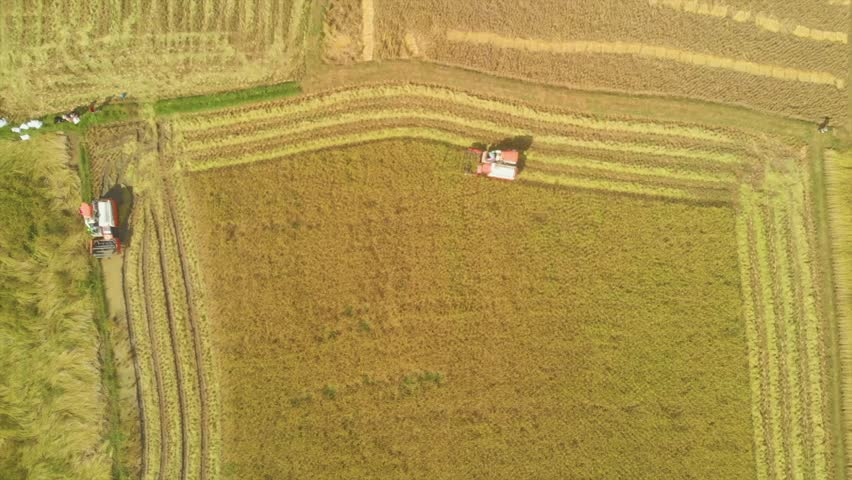 Aerial view on the Agricultural machinery working on the Thai Rice Field #1019316952