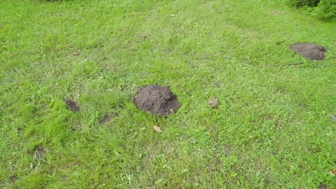The little heap of soil on the garden outside the grassy lawn