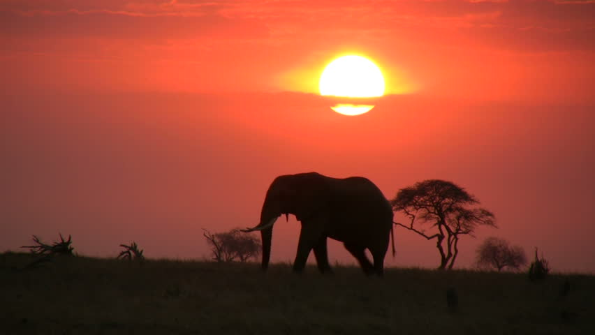 A single elephant moves across the camera with sunrise in the background.  #1019474107