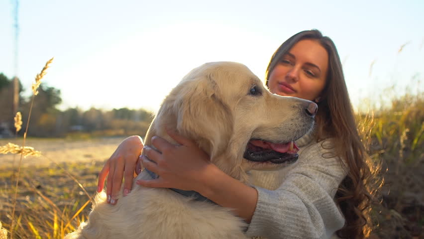 Golden Retriever Labrador Dog with : Video de stock (totalmente ...