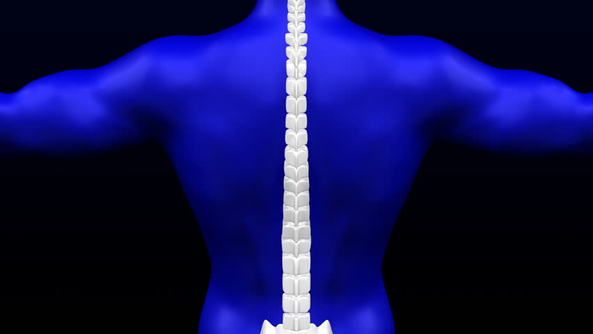 Lower back pain. Red blinking on the backbone. Loopable. Luma matte. 3D rendering. Royalty-Free Stock Footage #1019937925