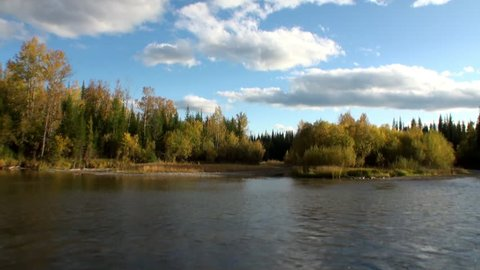 Autumn trees on shore of Lena Rive shooting from moving motorboat in Siberia.