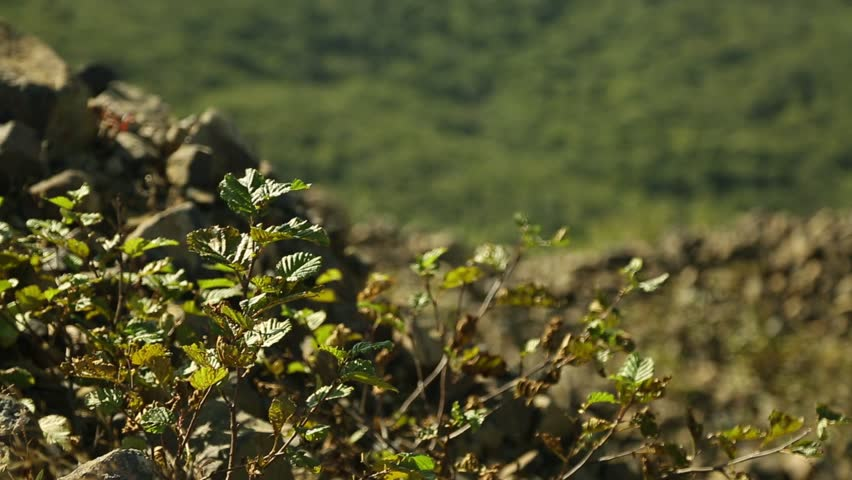 Green Forest on Iturup Island near Volcano Baransky | Shutterstock HD Video #1019961538