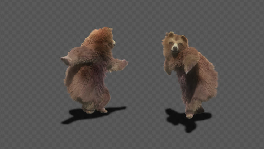 Bear CG fur 3d rendering animal realistic CGI VFX Animation  Loop alpha dance composition 3d mapping, Included in the end of the clip with Alpha matte.
