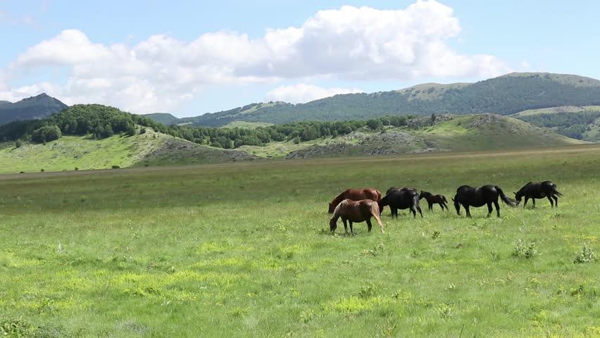 Horses in the National Park Gran Sasso and Monti della Laga | Shutterstock HD Video #1020317305