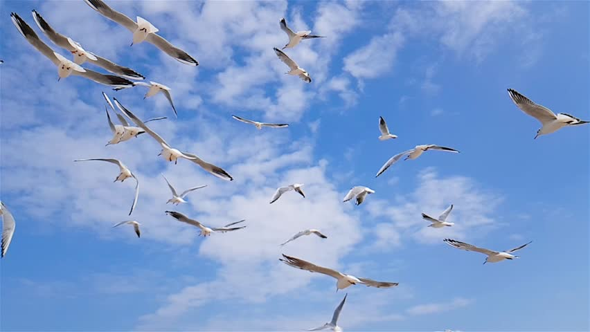 A group of seagulls flies against the wind, sky in the background, a group of birds of seagulls circling over the seashore, white seagulls flying over the sea, slow motion, seagulls against a blue sky