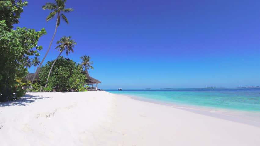 Palm tree on tropical island with turquoise water. Exotic seascape | Shutterstock HD Video #1020486952