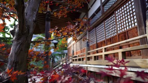 Autumn leaves with traditional Japanese house at background