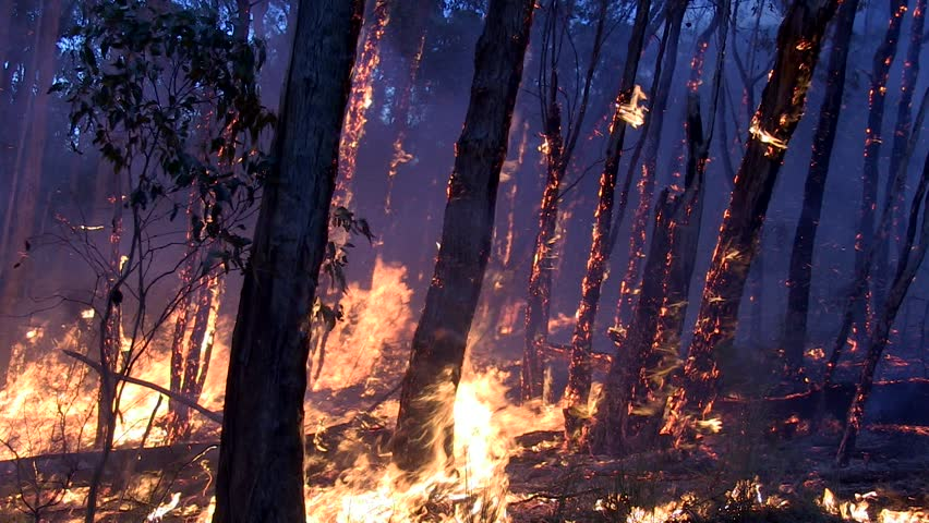Wild fire flames Royalty-Free Stock Footage #1020731767