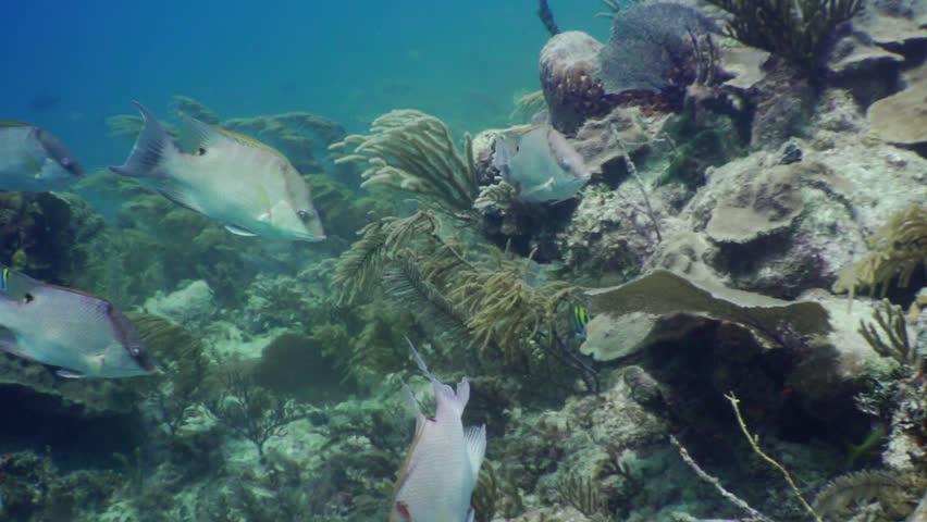 Reef fish caribbean ocean | Shutterstock HD Video #1020844126