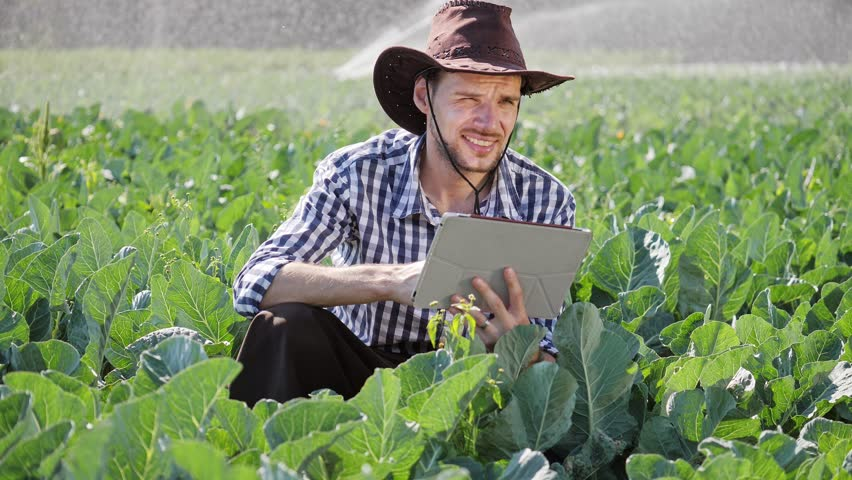 A Farmer uses a Digital Tablet while Monitoring his Plantation. A Farmer with an apron and a hat on his head.  Irrigation System of Vegetable Crops. Modern Use of Technology in Agricultural Activities | Shutterstock HD Video #1021124122