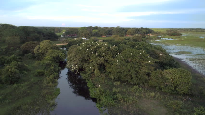 Aerial view of the beautiful landscape of trees and birds, white herons fly over the river to reach their nests, an exciting adventure of animal life   Shutterstock HD Video #1021153570