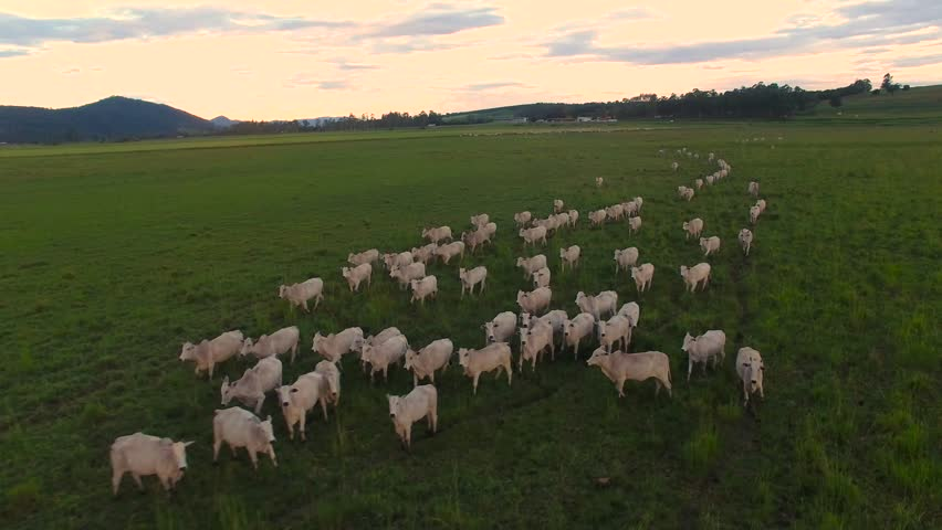 Pouso Alegre, Minas Gerais / Brazil - 12/23/2018: Aerial view of herd on farm