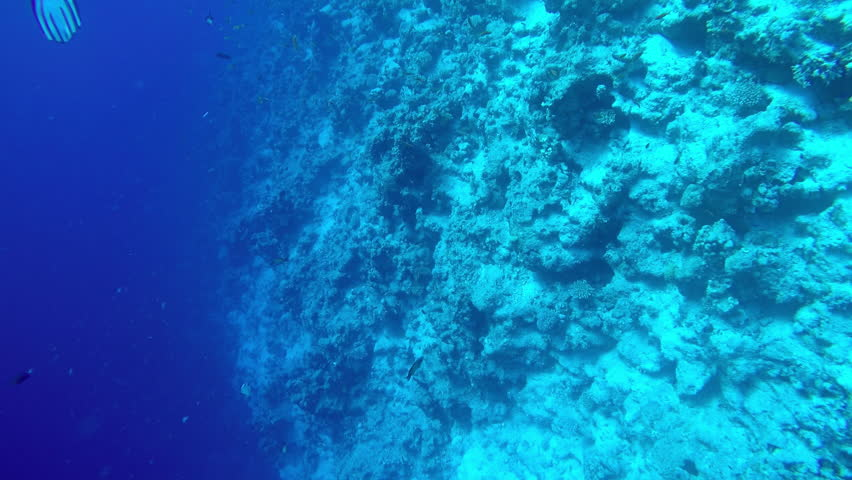 Egypt Dahab diving in the red sea. #1021523692
