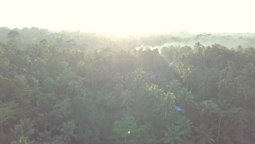 Magical footage of jungle through the sunshine aerial footage of the Indonesian nature | Shutterstock HD Video #1021538752