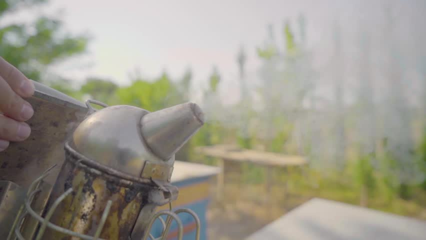 Hispanic Beekeeper uses smoke to calm bees in order to collect their honey on the Ecuadorian jungle. Caucasian   Shutterstock HD Video #1021602067