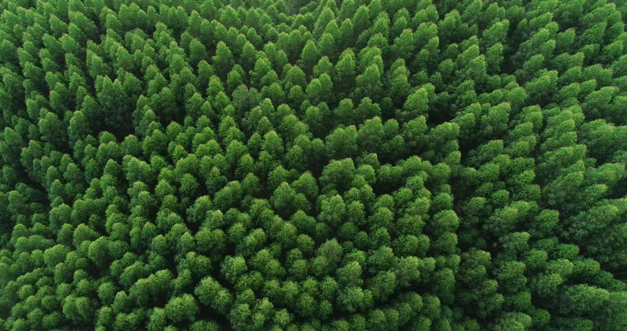 Aerial top view of waving summer green trees in forest | Shutterstock HD Video #1021633999