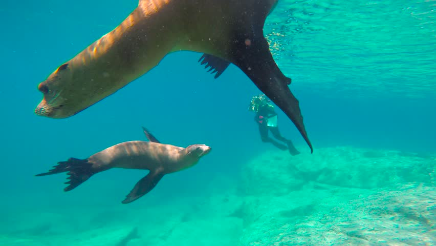 Mexico. Diving with seals in the sea of Cortez. #1021685932