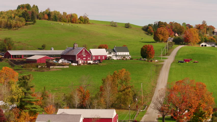 New England Red Barn and Farmhouse next to Country Dirt Road, Livestock grazing, Fall Foliage, Inspire 2 telephoto aerial