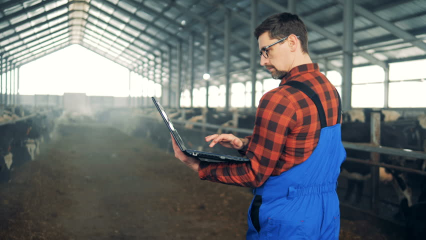 Agriculturist is walking along the byre with a laptop