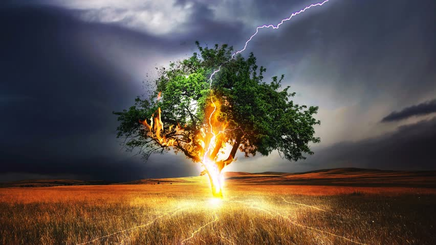 Cinemagraph of lightning storm on tree in field