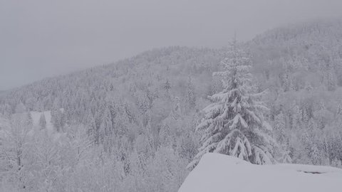 Aerial shot flight above pine tops in winter forest. Foggy weather in snow mountains landscape.