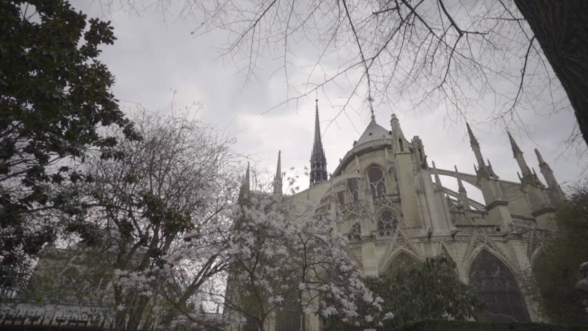 Paris, France - 08 23 2017: The back of the Notre Dame in Paris with white blossoms in the foreground   Shutterstock HD Video #1022179039