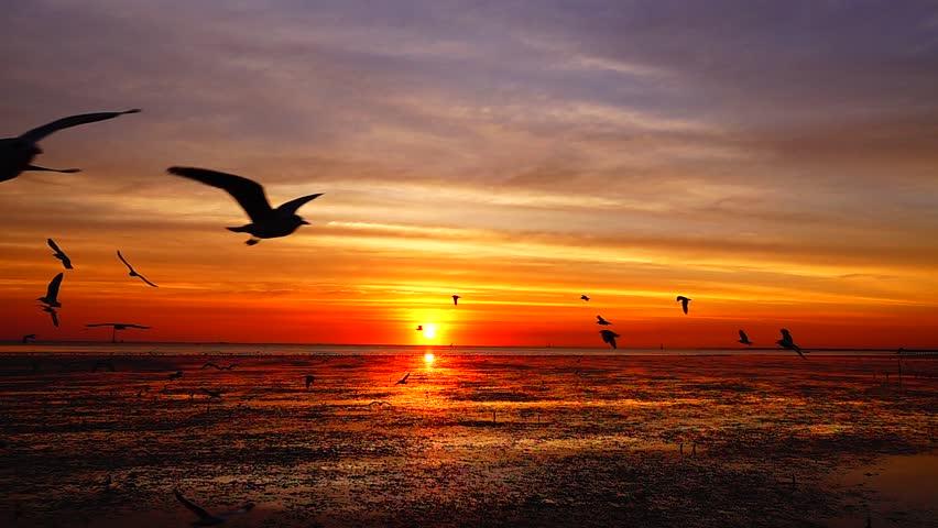 HD 1080p super slow seagulls fly beautiful full sunset sunlight sky beach background travel tourist. | Shutterstock HD Video #1022295313