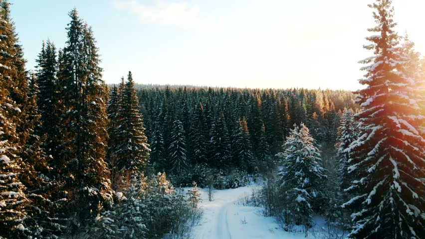 Epic Sunset Over Pine Trees In winter Cinematic Aerial Video. Nature In winter Concept: Drone Flight Over Beautiful Fir Forest. Snow Winter Background, 4K VIdeo. | Shutterstock HD Video #1022393863