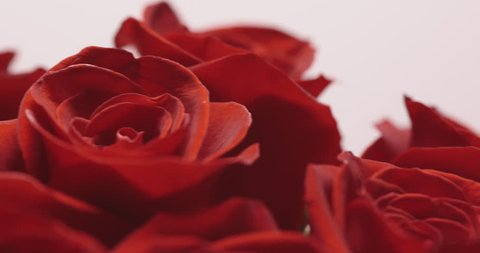 Bouquet of Roses on white background. close-up with camera movement.