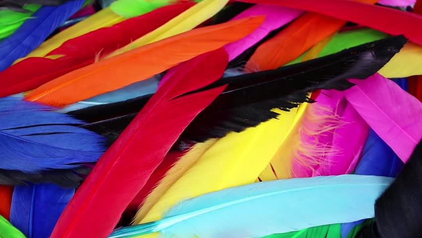 Colorful rainbow bir feathers background closeup video | Shutterstock HD Video #1022571535