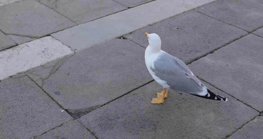 A seagull walking around