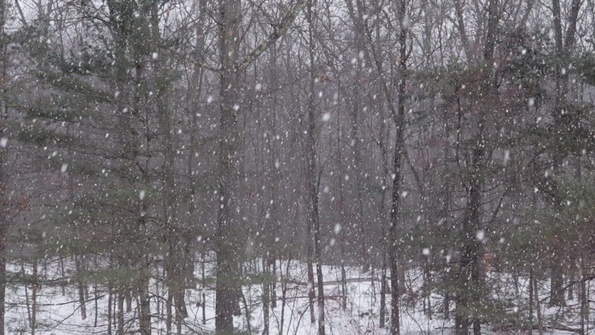 Snow falling in New England 2018, snow storm in New England, snowing in the woods, dead forest. very cold winter.