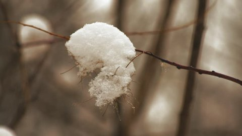Macro, Snow on the Branch in the Park